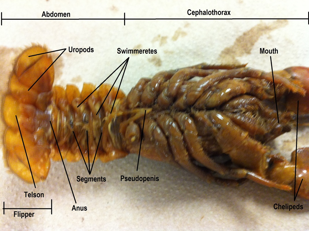 Arthropoda - Biology 11 Honours - Animalia Labs